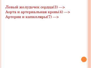 Левый желудочек сердца(3) —> Аорта и артериальная кровь(4) —> Артерии и капил