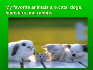 My favorite animals are cats, dogs, hamsters and rabbits.