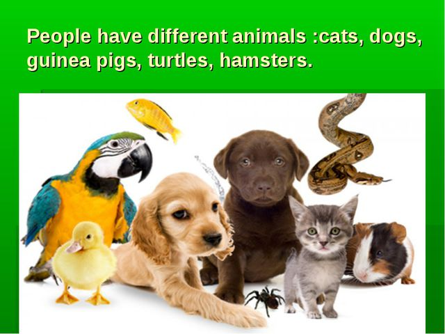 People have different animals :cats, dogs, guinea pigs, turtles, hamsters.