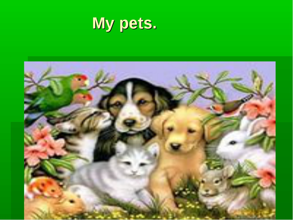 My pets.
