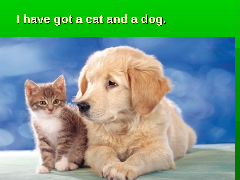 I have got a cat and a dog.