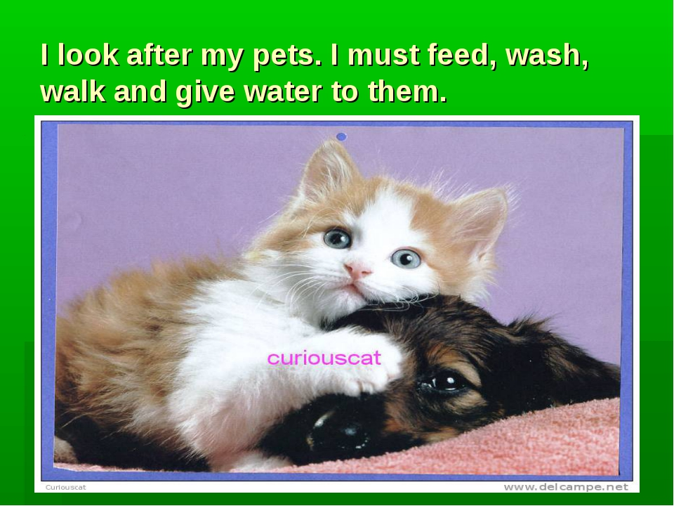 I look after my pets. I must feed, wash, walk and give water to them.