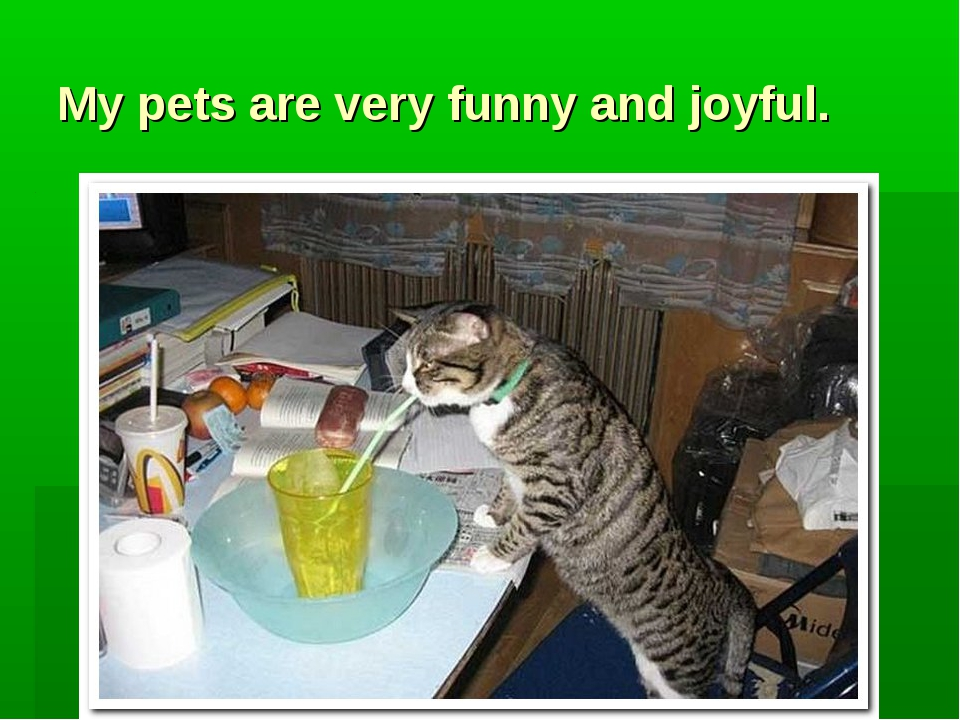 My pets are very funny and joyful.