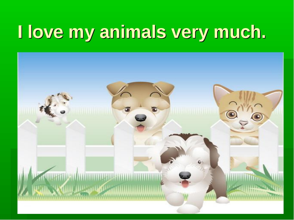 I love my animals very much.