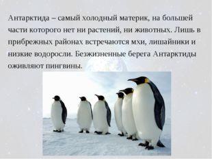 Антарктида – самый холодный материк, на большей части которого нет ни растени