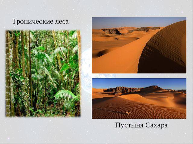 Тропические леса Пустыня Сахара