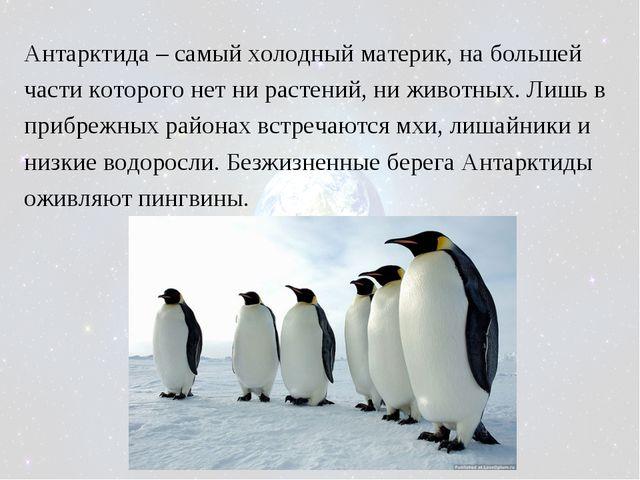Антарктида – самый холодный материк, на большей части которого нет ни растени...