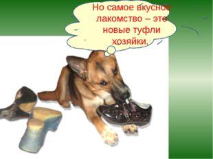 Но самое вкусное лакомство – это новые туфли хозяйки.