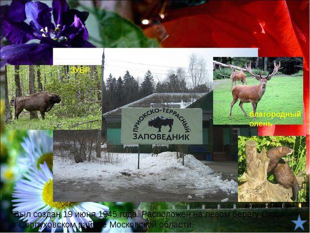 Животные лесной зоны Заповедники лесной зоны 2. Государственный природный зап...