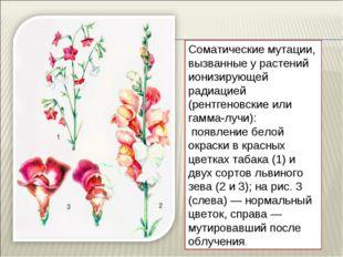 Соматические мутации, вызванные у растений ионизирующей радиацией (рентгеновс