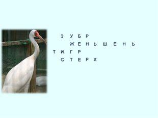 Р НЬШЕНЬ  РХ    ЗУБ ЖЕ ИГР СТЕ   Т