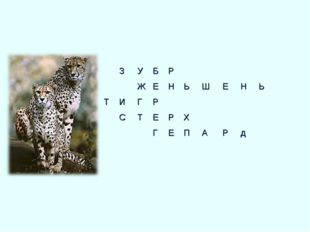 Р НЬШЕНЬ  РХ ЕПАРд   ЗУБ ЖЕ ИГР СТЕ Г  Т