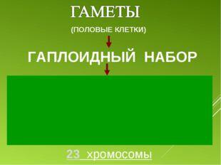 ГАПЛОИДНЫЙ НАБОР (ПОЛОВЫЕ КЛЕТКИ) 23 хромосомы 1 2 3 4 5 6 7 8 9 10 11 12 13