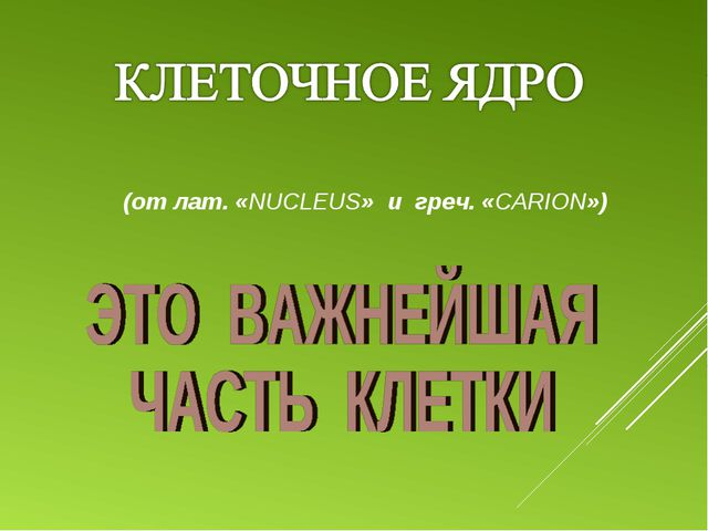 (от лат. «NUCLEUS» и греч. «CARION»)