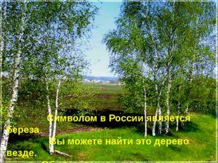 The Символом в России является береза. Вы можете найти это дерево везде. Об э