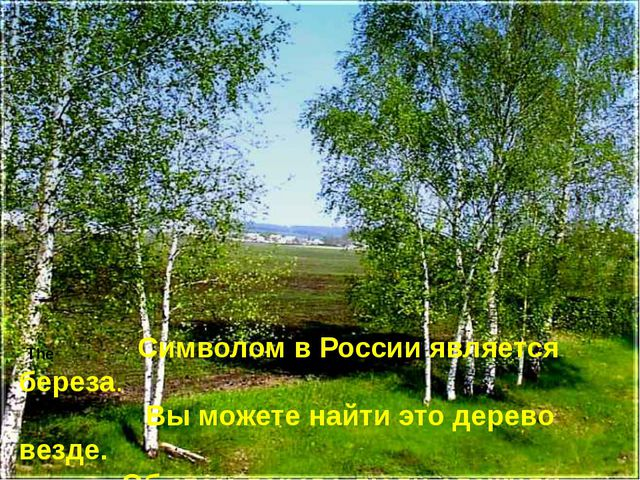 The Символом в России является береза. Вы можете найти это дерево везде. Об э...