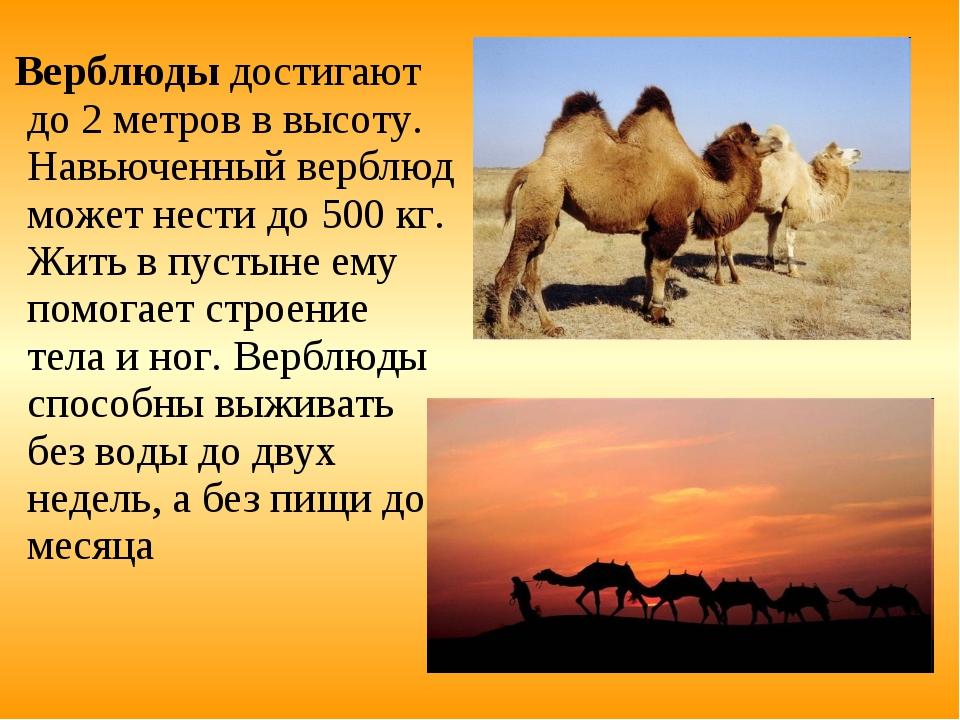 прогрессировании болезни животные пустыни описание с картинками учесть потребности