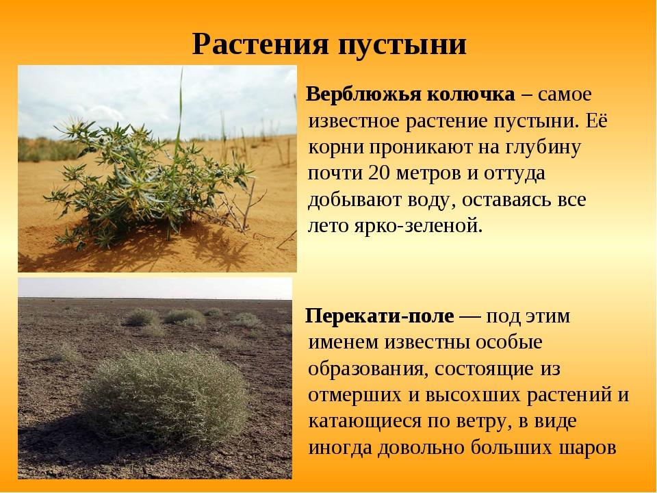 Поиск растения по фотографии фото фальшстена