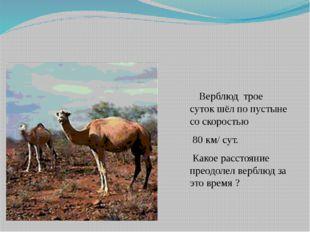 Верблюд трое суток шёл по пустыне со скоростью 80 км/ сут. Какое расстояние