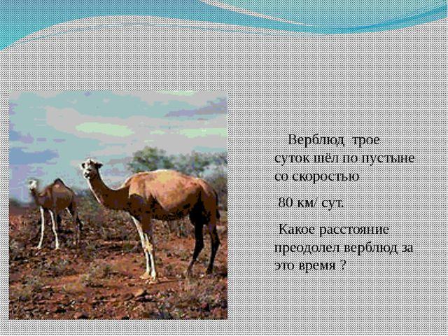 Верблюд трое суток шёл по пустыне со скоростью 80 км/ сут. Какое расстояние...