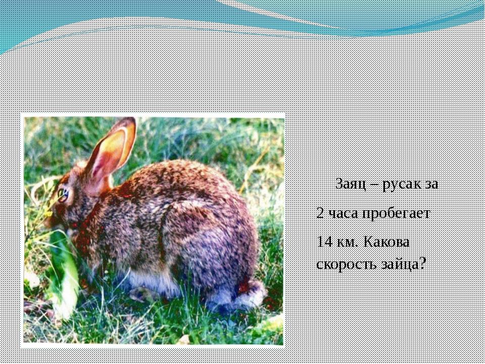 Заяц – русак за 2 часа пробегает 14 км. Какова скорость зайца?