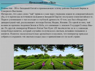 Происхождение «Чая» Родина чая – Юго-Западный Китай и примыкающие к нему рай