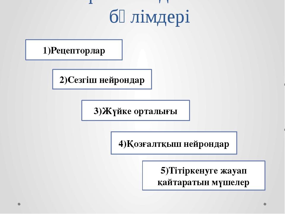 Рефлекстік доғаның бөлімдері 1)Рецепторлар 2)Сезгіш нейрондар 3)Жүйке орталығ...