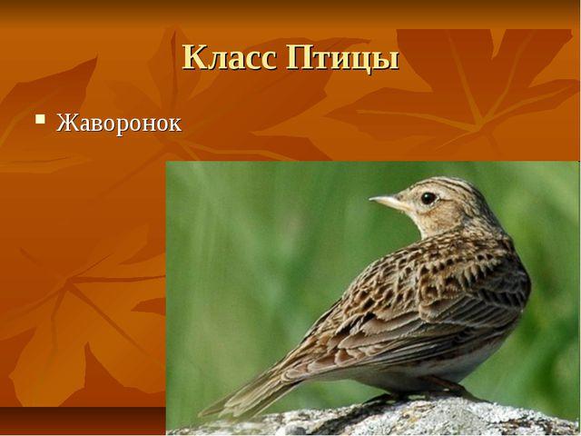 Класс Птицы Жаворонок