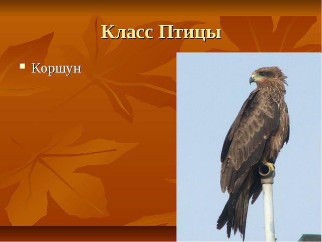 Класс Птицы Коршун