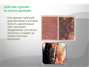 Действие курения на органы дыхания. При курении табачный дым проникает в рото