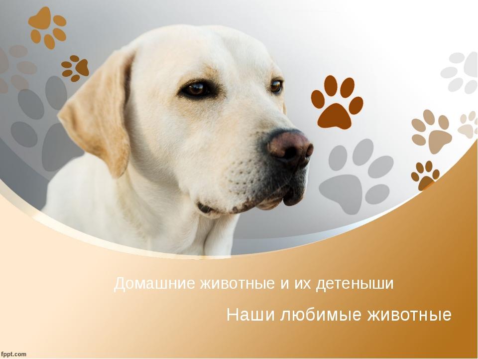 Домашние животные и их детеныши Наши любимые животные