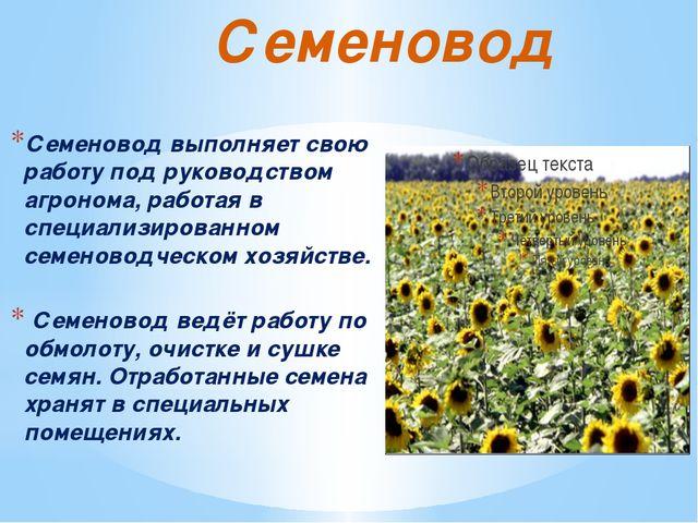 Семеновод Семеновод выполняет свою работу под руководством агронома, работая...