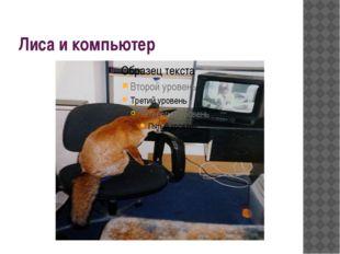 Лиса и компьютер
