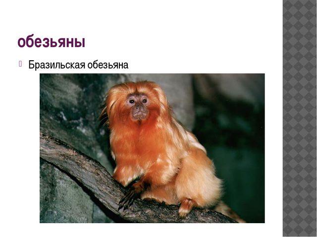 обезьяны Бразильская обезьяна