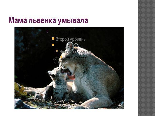 Мама львенка умывала