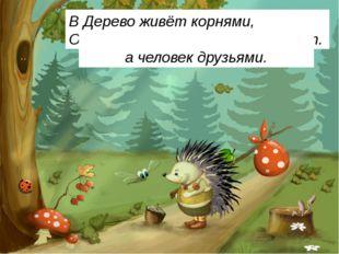 Весной веселит, летом холодит, Осенью питает, зимой согревает. Дерево живёт к