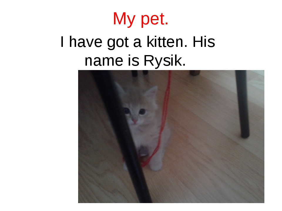 My pet. I have got a kitten. His name is Rysik.