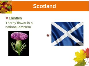 Scotland Thistles Thorny flower is a national emblem National flag