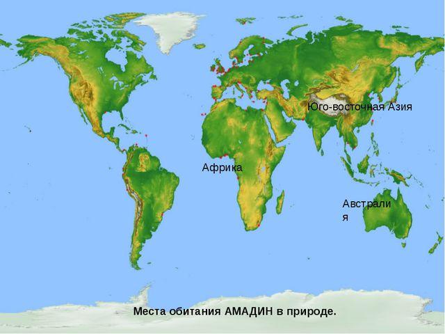 Африка Австралия Места обитания амадин в природе Африка Австралия Юго-восточ...