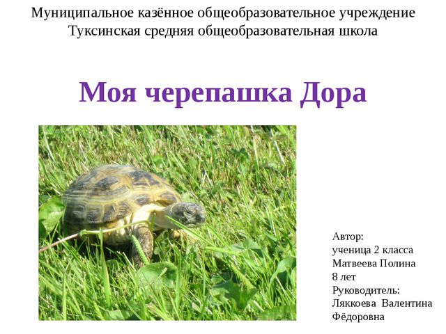 Муниципальное казённое общеобразовательное учреждение Туксинская средняя обще...