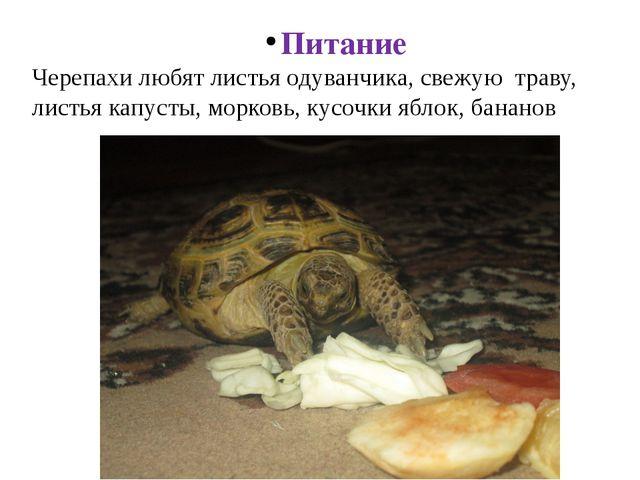 Питание Черепахи любят листья одуванчика, свежую траву, листья капусты, морко...