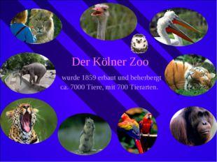 Der Kölner Zoo wurde 1859 erbaut und beherbergt ca. 7000 Tiere, mit 700 Tiera