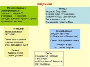 Млекопитающие Однопроходные (утконос-1; ехидна-5) Сумчатые – 7 семейств (кен