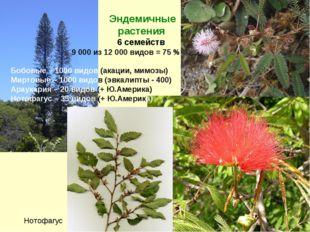 Эндемичные растения 6 семейств 9 000 из 12 000 видов = 75 % Бобовые – 1000 в