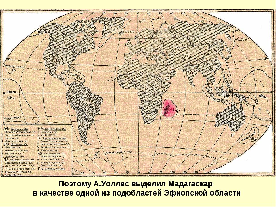 Поэтому А.Уоллес выделил Мадагаскар в качестве одной из подобластей Эфиопской...