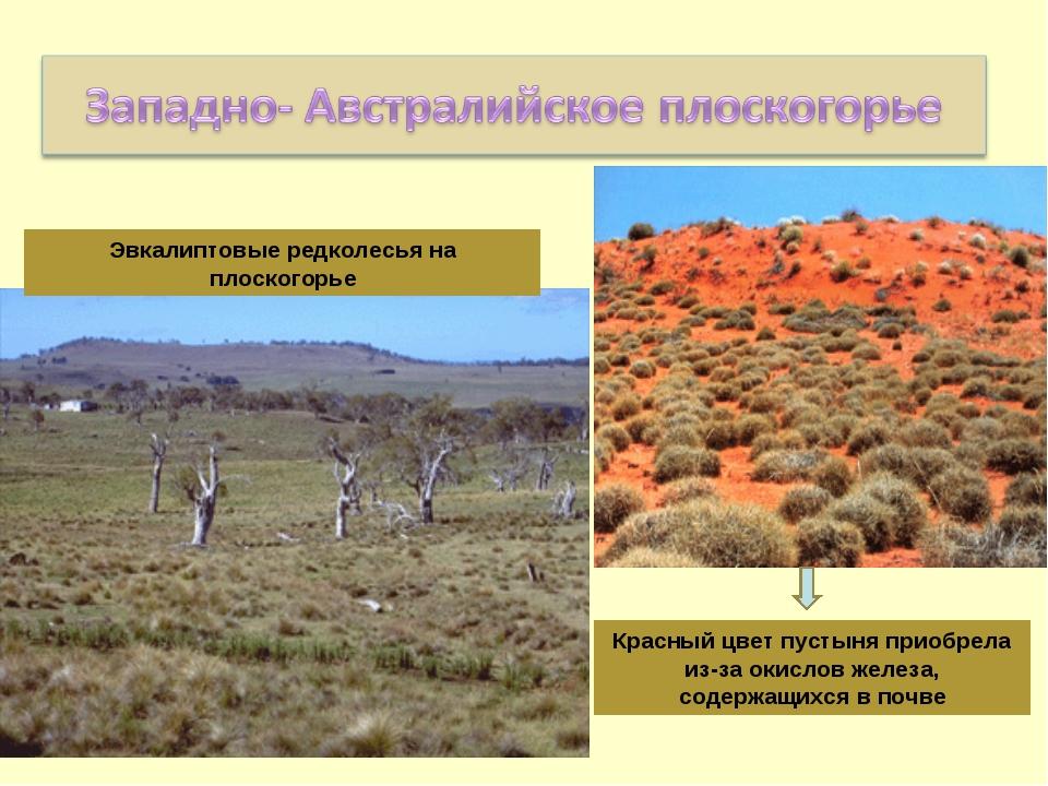 Эвкалиптовые редколесья на плоскогорье Красный цвет пустыня приобрела из-за о...
