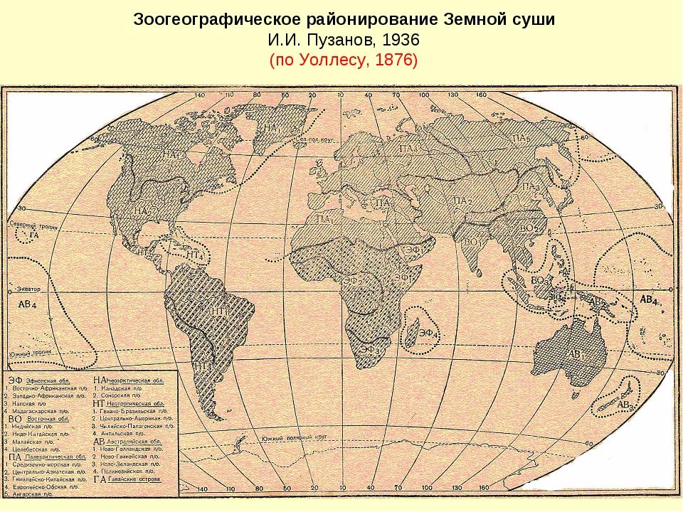 Зоогеографическое районирование Земной суши И.И. Пузанов, 1936 (по Уоллесу, 1...