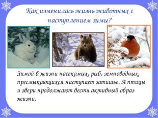 Как изменилась жизнь животных с наступлением зимы? Зимой в жизни насекомых,