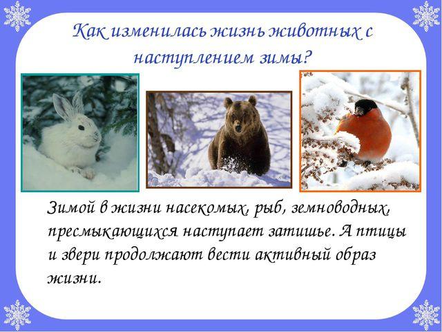 Как изменилась жизнь животных с наступлением зимы? Зимой в жизни насекомых,...