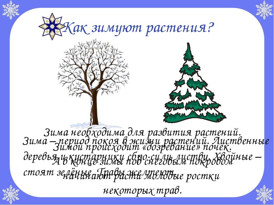 Как зимуют растения? Зима – период покоя в жизни растений. Лиственные дерев...